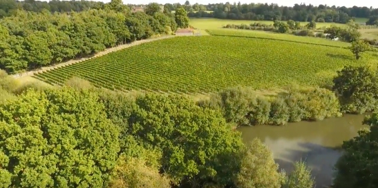 Great Windsor Park Vineyard, Aerial View