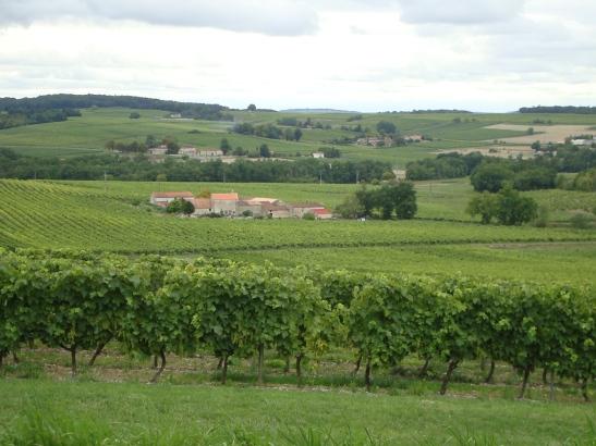 Cognac landscape photo
